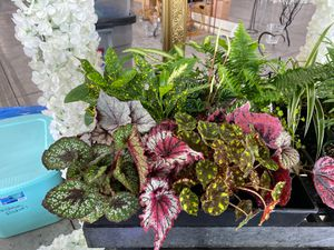 Different potted plants for Sale in Fresno, CA