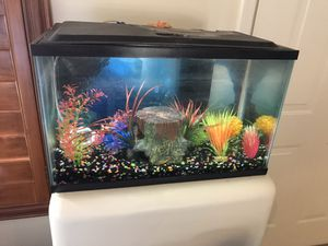 10 Gallon Fish Tank for Sale in Fort McDowell, AZ