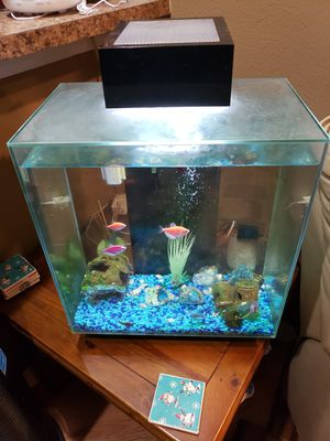 Fluval aquarium with Beta and glowfish for Sale in Brandon, FL