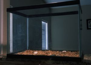 Tank 20 gal for Sale in Garland, TX
