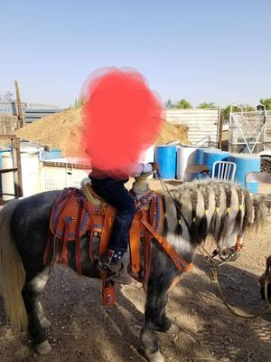 Pony saddle for Sale in Bakersfield, CA