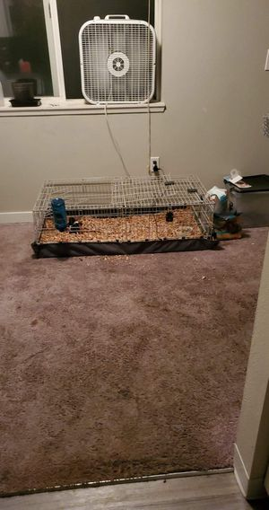 Ginuea pig cage and bottle for Sale in Port Orchard, WA