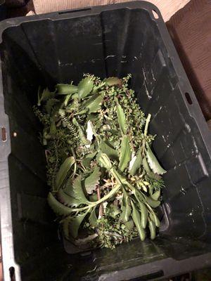 Succulent/Cactus Cuttings for Sale in Buena Park, CA
