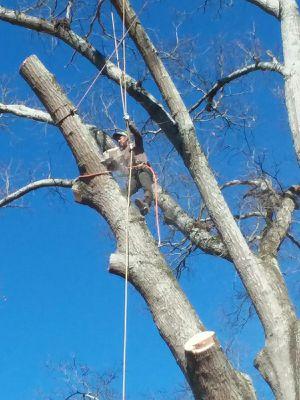 Tree service for Sale in Atlanta, GA