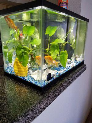 aquarium set with fish for Sale in Pasco, WA