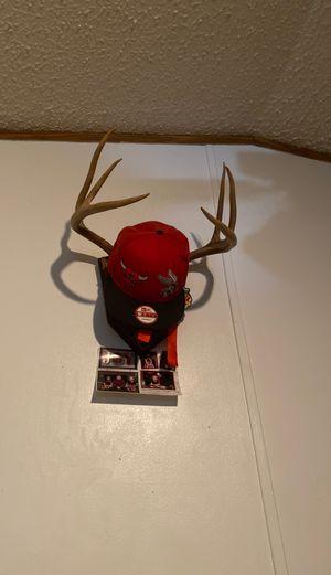 Deer horn mount for Sale in Wingina, VA
