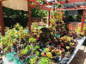 $1.00+ Succulent plants for sale for Sale in Highland, CA