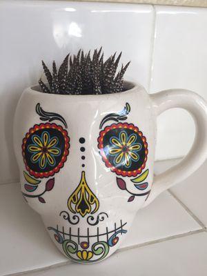 Cup with three Zebra Hawarthia plants. for Sale in Chula Vista, CA