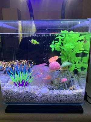 2 glowing fishes , for free for Sale in San Jose, CA