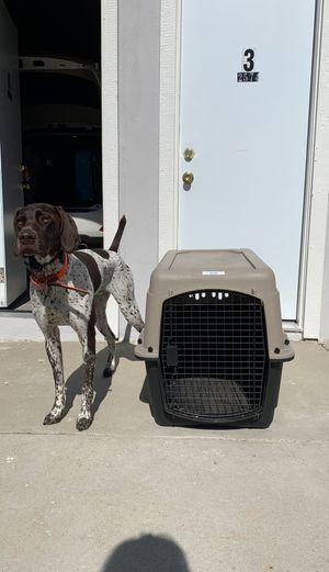 Great Choice Medium Dog Kennel for Sale in San Diego, CA
