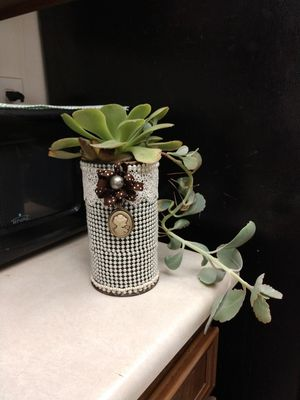 Pretty container with live succulents for Sale in Hemet, CA