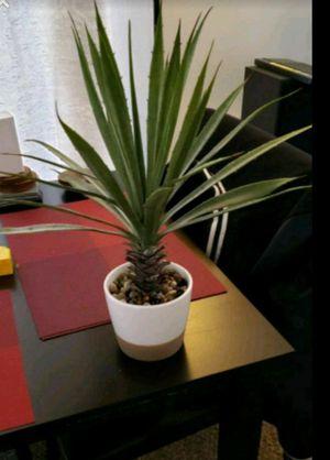 Decorative plant for Sale in Vienna, VA