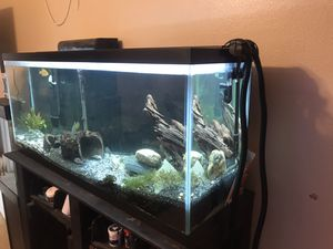 55 gallon fish tank everything you see included for Sale in Riverside, CA