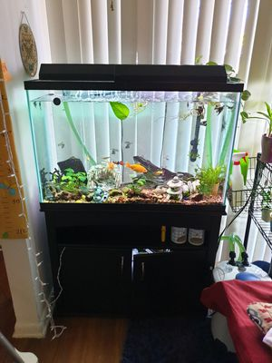 55gal fish tank with fish , canister filter 500 gal per hour for Sale in Herndon, VA