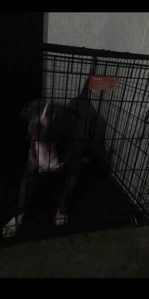 XXL dog kennel for Sale in Clarksville, TN