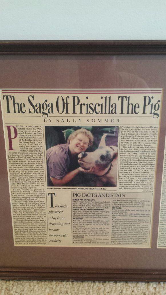 The Saga Priscilla the Pig in frame 1980's