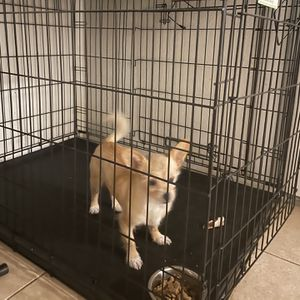 "Top Paw 42"" Double Door Folding Crate for Sale in Houston, TX"