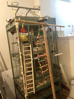 Indian ringneck parakeet with cage, toys and food for Sale in Waltham, MA