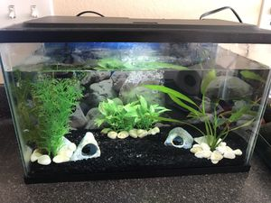 Male Beta and Fish Tank for Sale in Chula Vista, CA