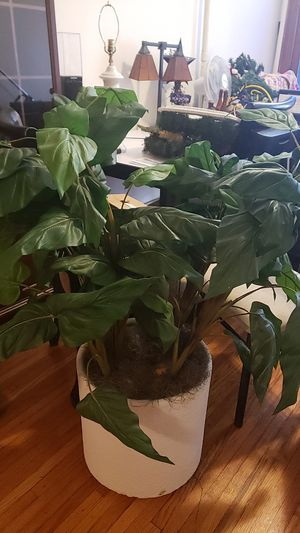 Fake plant for Sale in Parkville, MD