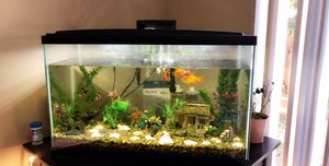 Fish tank including 10 🐠 and their supplies (food, filter, water conditioner and more) the table is included too. 30x12.5.18.5 Emptying and pick up a for Sale in Mountain View, CA