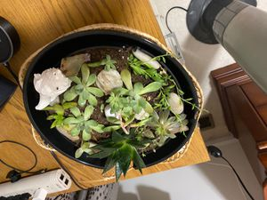 Succulents bowl for Sale in Dublin, OH