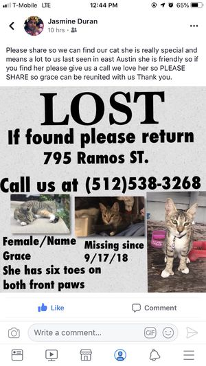 Lost kitten for Sale in Austin, TX