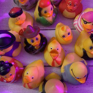 Ducks for Sale in Philadelphia, PA