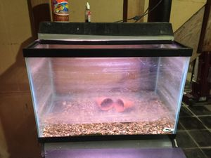 Fish tank 35 gallons with 2 fish for Sale in Detroit, MI
