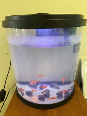 10$ gold fish for Sale in Clearwater, FL