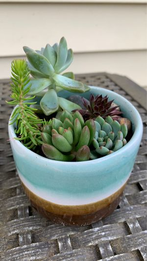 Unique, handmade ceramic pot beach colors with succulents for Sale in Vancouver, WA