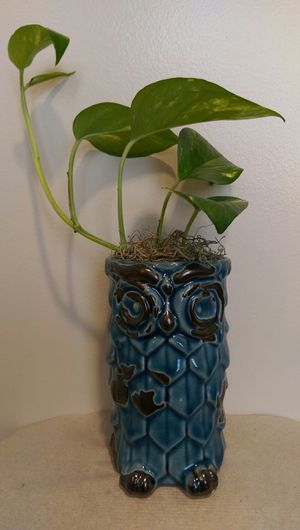 Mothers's Day Air Cleaning Vine Plant In Owl Ceramic Planter for Sale in Virginia Beach, VA