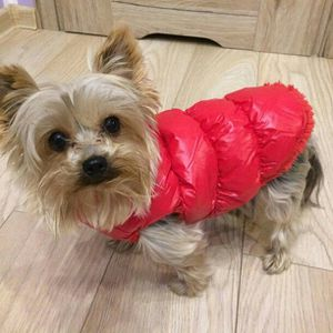 Doggie coat(s) for Sale in Baltimore, MD