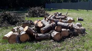 Free Firewood for Sale in Kannapolis, NC