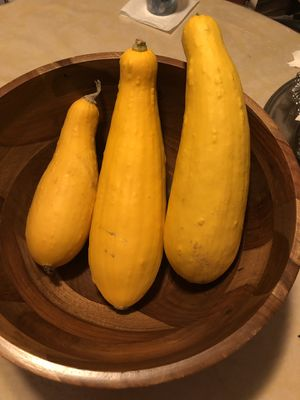 Fresh picked squash for Sale in Naugatuck, CT
