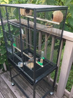 6 birds with 1 big cage for Sale in Nashville, TN