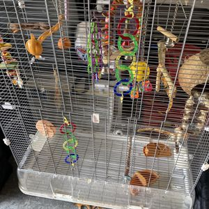 Small Bird Cage for Sale in Spring Hill, FL