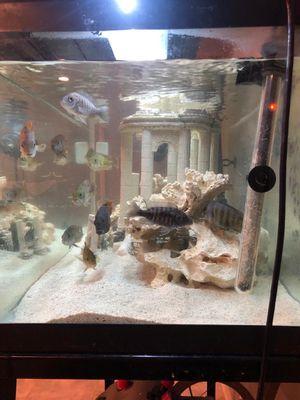 55 gallon cichlid fish tank for Sale in Dearborn, MI