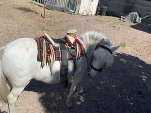 Only Mexican pony saddle for Sale in Gilroy, CA