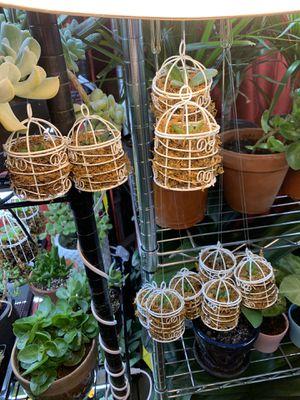 Succulent birdcage deco for Sale in Paramus, NJ