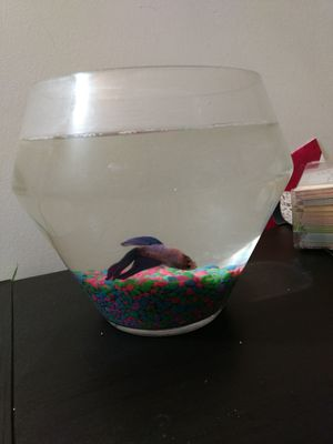 Betta fish with aquarium for Sale in Rockville, MD