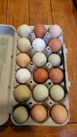Chicken eggs for Sale in Olympia, WA