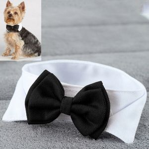 Formal Cat or Dog Collar for Sale in Coral Springs, FL
