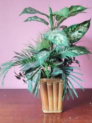 Artificial Plant in Bamboo Pot for Sale in Washington, DC