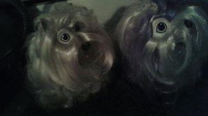 My little Ponies friends/ puppies for Sale in Pemberton, NJ