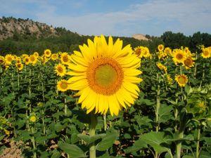 best topsoil for sale in northern Virginia for Sale in Manassas, VA