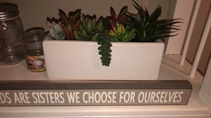 Succulent plant for Sale in Houston, TX