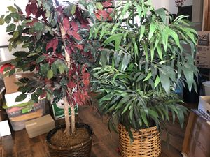 Artificial Plants for Sale in Allen, TX