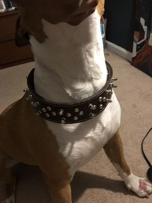 Large dog collar for Sale in Bowie, MD