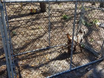 Very Large Dog/ Goat Pet Kennel Cage for Sale in Astatula,  FL